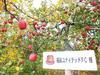 【予約販売】2021福島ユナイテッドFCのりんご