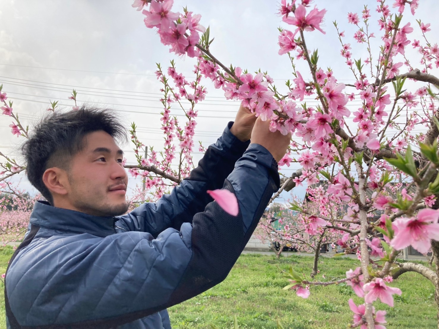 【活動報告】桃の摘花を行いました!