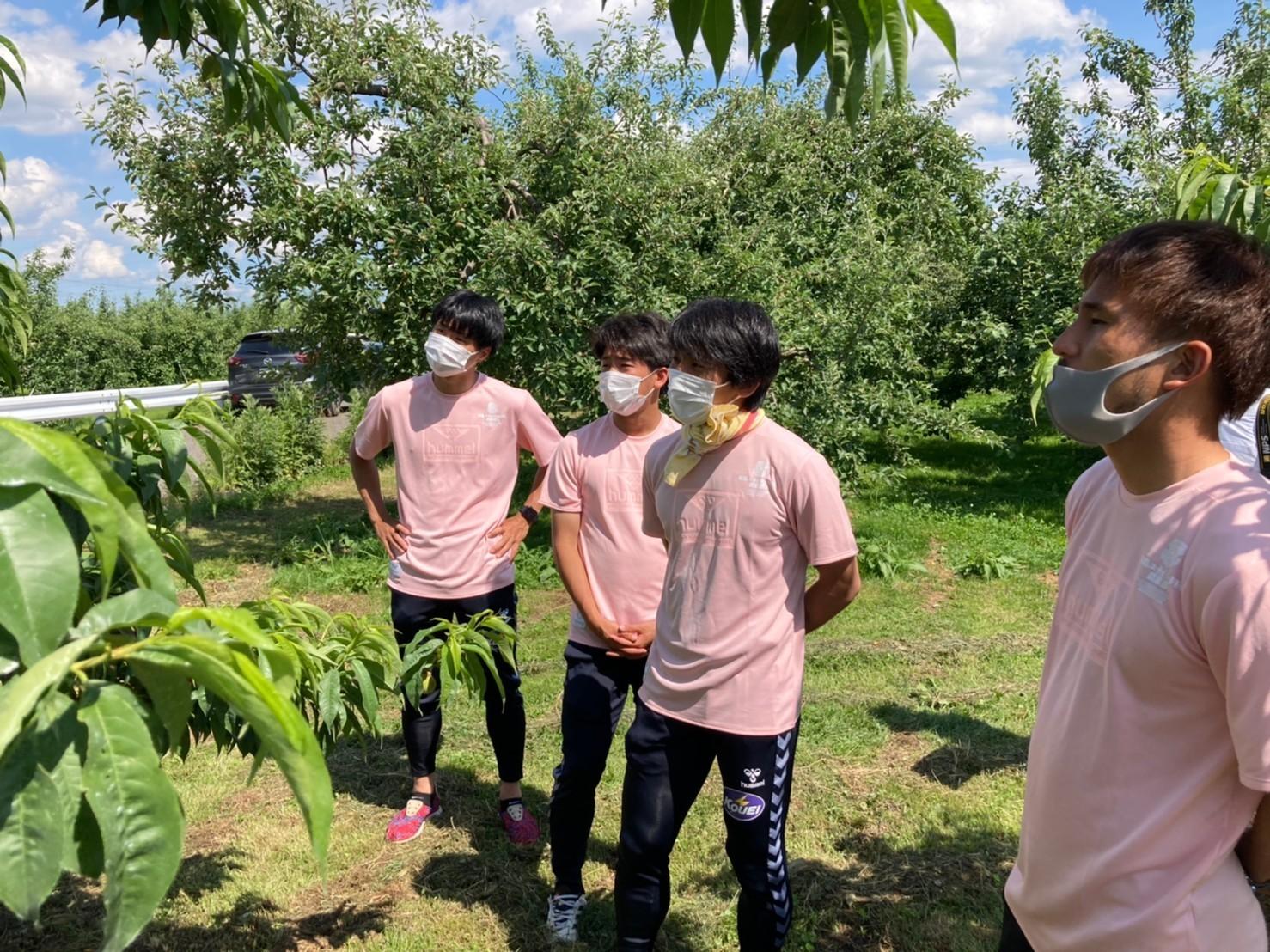 【活動報告】桃の摘果を行いました!