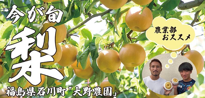 2021大野農園梨